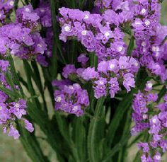 185 best flowers we grow images on pinterest color change flowers in the book allison starts a business called the flower farm where she grows flowers specifically for drying this image shows the popular drying flower mightylinksfo