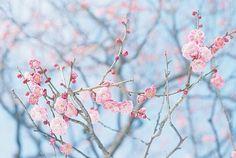 甘いピンクの春