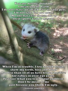 I think Opossums are cute and very interesting creatures