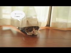 Great video. This is the way to introduce new kittens. Very smart!   ~~~   NEW! The Story Of Maru & Hana: Episode 1 — Cute Overload