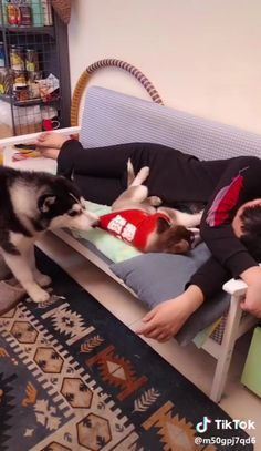 Cats funny cute hilarious animals Ideas for 2019 Cute Funny Animals, Cute Baby Animals, Funny Cute, Animals And Pets, Super Funny, Cute Animal Videos, Funny Animal Pictures, Funny Babies, Funny Dogs