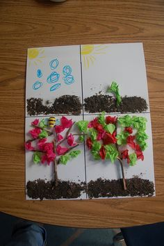 How does an apple tree grow?