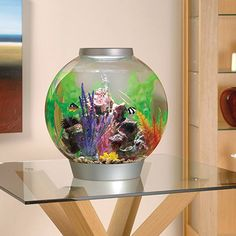Your one stop shop for ALL your biorb needs. Biorb Aquariums are on SALE! Huge Selection of BiOrb & BiUbe Filters and Accessories. Aquarium Shop, Aquarium Fish, Biorb Fish Tank, Self Cleaning Fish Tank, Fish Home, Funny Animal Videos, Game Room, The Secret, Pet Supplies