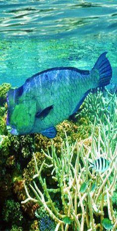 Emmy DE via Brilliant Luxury * Diving Great Barrier Reef