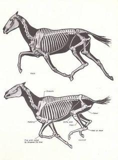 「horse skeleton run」の画像検索結果