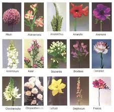 Image result for flowers pictures and names