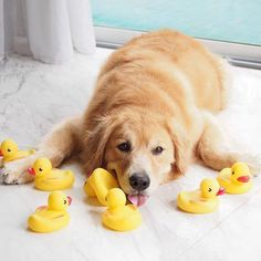 """""""Ducks assembled. Now to get them in a row..."""""""