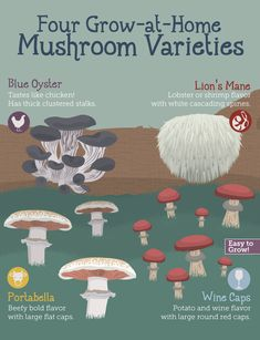 Grow Your Own Mushrooms, Growing Mushrooms At Home, Garden Mushrooms, Edible Mushrooms, Wild Mushrooms, Stuffed Mushrooms, Growing Vegetables, Growing Plants, Growing Tomatoes