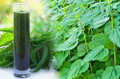 Kopřiva – to je přírodní lék, který nám dokáže ovlivnit celý organismus a vyléčit spoustu neduhů. Nicméně, jedna zjejich nesporných pozitiv je, že je zcela zdarma a knalezení prakticky všude – na loukách, polích či jen tak u domu. Stačí se pouze rozhlédnout. Stejně jako je kopřiva prospěšná na zahradě, například ve formě výluhů, jako … Halibut, Parsley, Preserves, Celery, Korn, Remedies, Food And Drink, Hair Beauty, Herbs
