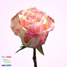 Comparte emociones y envía sonrisas con Vivelasflores.com. Nuestra rosa FIESTA es un producto innovador que de seguro sorprenderá a mamá.