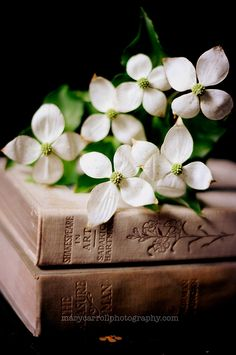 In a Soft Light: books and flowers
