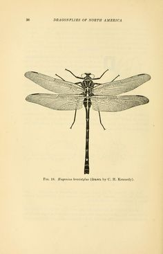 A handbook of the dragonflies of North America