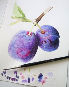 Some unfinished 'Merryweather Damson' plums, from a live demo I did. Such amazing vibrant colours to them. Think I'll paint them again one day but BIG 🤩 Watercolor Fruit, Watercolor Flowers, Watercolors, Watercolor Paintings, Anna Mason, Vibrant Colors, Colours, Art Inspo, Colored Pencils