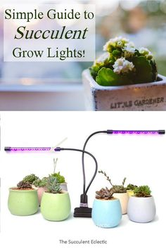 Learn what you need to know about choosing and using grow lights for succulents. LEDs, fluorescent lights, red/blue or white - which do you need and why does it matter? Pin now, read later!  #succulents #succulentgrowlights #succulentcare #growlights