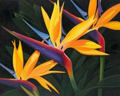 These lovely Birds of paradise would be a common sight among the foliage on the property! Absolutely bea-u-ti-ful! Tropical Flowers, Hawaiian Flowers, Exotic Flowers, Pretty Flowers, Exotic Birds, Colorful Birds, Bird Of Paradise Tattoo, Birds Of Paradise Plant, Birds Of Paradise Flower