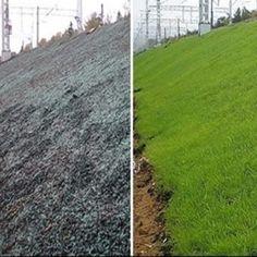 Гидропосев газона под ключ | Русские газоны Country Roads, Plants, Flora, Plant, Planting