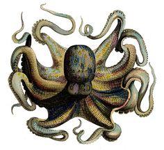 *The Graphics Fairy LLC*: Instant Art Printable - Marvelous Octopus & Snail