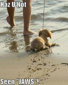 I get it, little doggy, I really do....