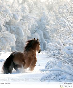 """Gorgeous Horses........""""STOMPING HOOVES & WHINNYING NEIGHS-----WHERE DID I THROW THAT CLUMSY FIRST-TIME RIDER???? .....HE'S GOTTA BE HERE SOMEPLACE......ccp"""