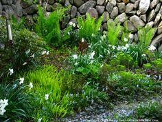 May in the Secret Garden ⓒ michaela medina - thegardenerseden.com