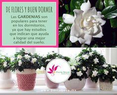 Gardenias, Table Decorations, Home Decor, Flowers, Art, Decoration Home, Room Decor, Home Interior Design, Dinner Table Decorations