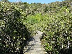 mangroves at Waitangi