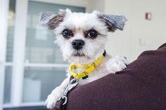 November Is Senior Pet Month: Consider Adopting an Older Pet
