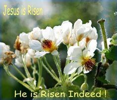 Voices for the Unborn: Happy Easter from Voices for the Unborn!  http://voicesunborn.blogspot.com/2016/03/happy-easter-from-voices-for-unborn.html#.VvcsePkrLIU