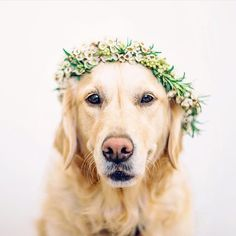 Wedding pets in flower crowns! Image: The Gehrmanns Flower Crown: Flower & Bloom