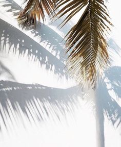 so many things: fotografia Beach Aesthetic, Summer Aesthetic, White Aesthetic, Aesthetic Photo, Aesthetic Backgrounds, Aesthetic Wallpapers, The Beach People, Tropical Vibes, Summer Vibes