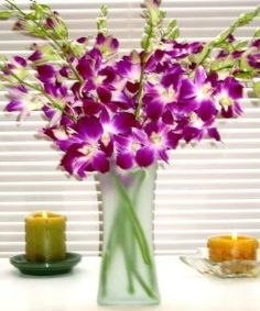 Fresh Flowers - Purple Dendrobium Orchids with Vase  Order at http://www.amazon.com/Fresh-Flowers-Purple-Dendrobium-Orchids/dp/B003IEFXL6/ref=zg_bs_3745171_19?tag=bestmacros-20