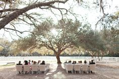 Beautiful ceremony tree | Andi Mans #wedding. Love the ceremony spot but not the chairs.