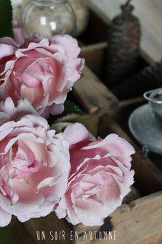 roses et casier