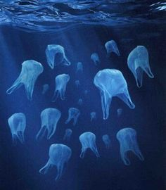 Plastic bags look like jelly fish to various sea animals. They eat the bags, which get stuck in their stomach/intestines and kill them. Use a reusable bag!