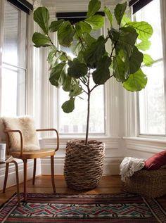 Items by designbird: Fiddle Leaf Fig