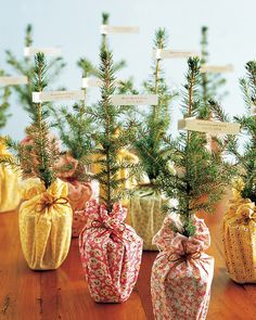 Give a favor that symbolizes love growing and becoming stronger with time. Many seedlings are available at online nurseries—these are foot-tall Norway spruces.