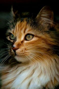 Cute! ##cats