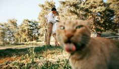 """Los gatos son animales tiernos y curiosos. Hoy te traemos una colección de 15 gatos que """"arruinaron"""" la foto perfecta... o más bien, """"se robaron"""" la foto.                                   Y bien, ¿cuál es tu favorita?"""
