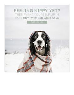 Cute dog email ad from Boden.
