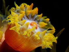 Dangerous and Deadly Sea Creature Photos -- National Geographic