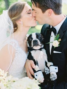 Caption this ring bearer pup! Photography : Mike Cassimatis Photography Read More on SMP: http://www.stylemepretty.com/missouri-weddings/st-louis/2016/08/12/bright-and-beautiful-croatian-wedding-with-boston-terrier/