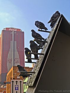 South Africa : Street Art in Johannesburg - Mallory on TravelMallory On Travel Johannesburg City, Le Cap, Pretoria, Creative Advertising, Art Installation, My Land, Street Artists, Crows, Ravens