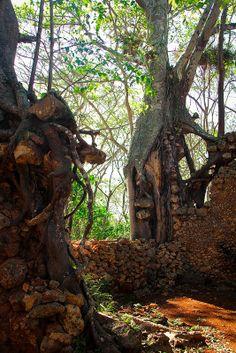 Coffee Plantation Ruins - Matanzas, Cuba