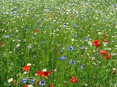 Boring lawns - your days are numbered!  - article on  Gardening for wildlife - Homes for Wildlife - The RSPB Community