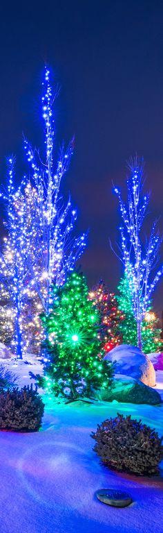 Christmas Lights | LOLO❤︎
