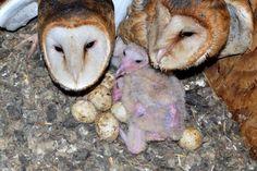 fêmea e macho protegendo suas crias