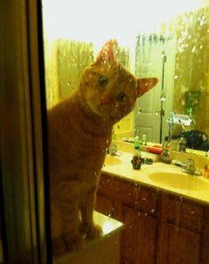 chat qui regarde son maître sous la douche