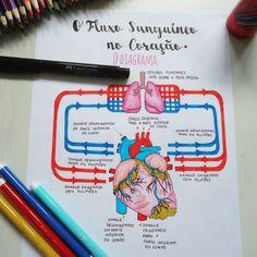 FLUXO SANGUÍNEO NO CORAÇÃO O lado direito do coração recebe o sangue pobre em oxigênio das veias do corpo inteiro. Ele bombeia o sangue…