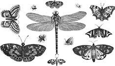 Insects Animals Line Art - Free vector graphic on Pixabay Tribal Sleeve Tattoos, Tattoos Skull, Vintage Wall Art, Vintage Walls, Retro Vintage, Public Domain, Design Dragon, Dragons Tattoo, Photo Café