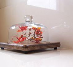 Ambientar con FANALES: glass cloches | Decorar tu casa es facilisimo.com